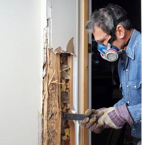 Spartanburg Termite Inspection