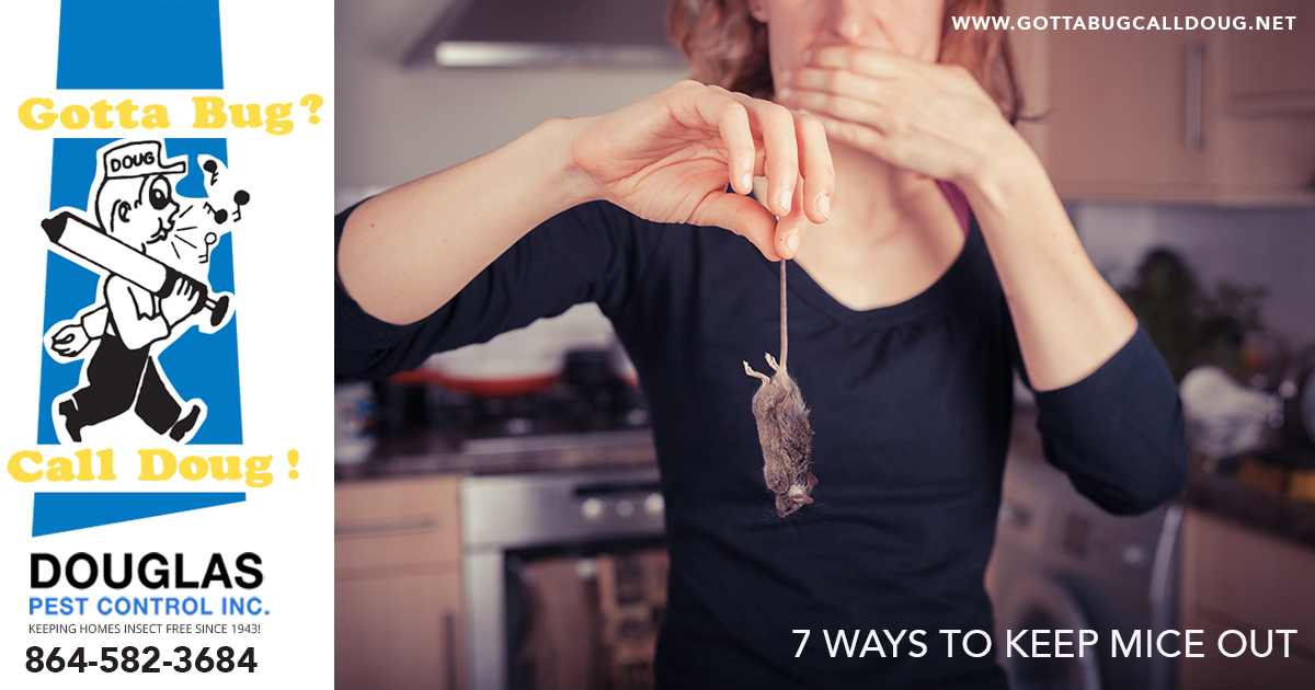 7 Ways To Keep Mice Out